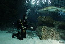 Jaws Shark Diving (6)