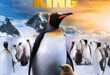Penguin King DVD Packshot