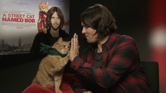 james-bowen-bob-the-cat-film-interviews